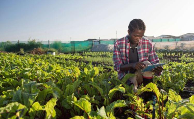 بلاکچین در کشاورزی